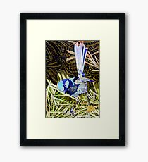 Superb Fairy Wren 2 Framed Print