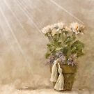White Roses In The Light by Lois  Bryan