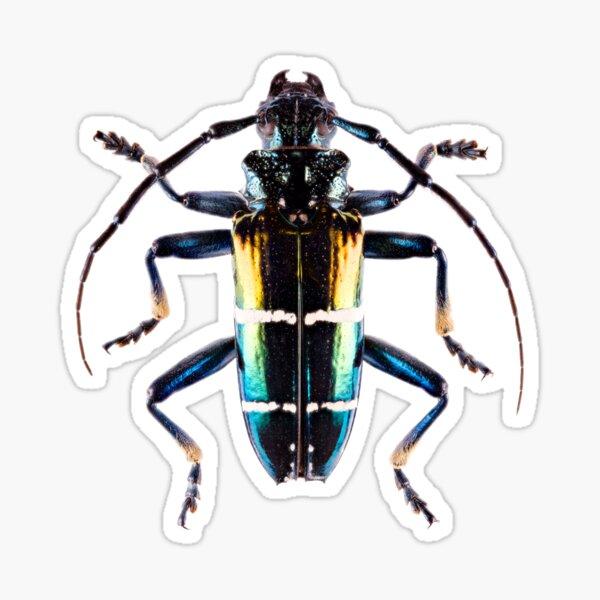 Long-Horned Beetle (Sphingnotus mirabilis) Sticker