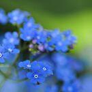 Little blue eyes by Heather Thorsen