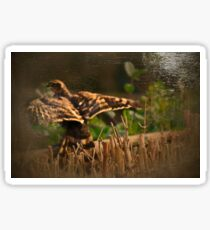 Vintage hawk - image 2 Sticker