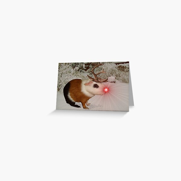The Rednosed Guinea Pig Greeting Card