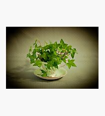 Tea Cup Ivy Photographic Print