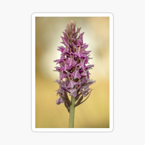 Marsh orchid Sticker