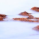Seaweed in the Shallows by aussiedi