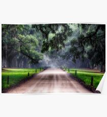 Live Oak and Spanish Moss Poster
