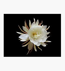 Queen Of The Night Photographic Print