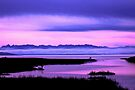 olympic mountains over north puget sound - pink by dedmanshootn