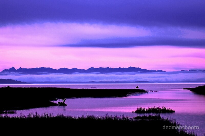 Quot Olympic Mountains Over North Puget Sound Pink Quot By
