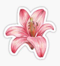 lily flower Sticker