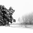 12.2.2016: Pine Trees on the Field II by Petri Volanen