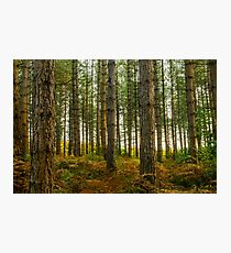 Bedgebury National Park Photographic Print