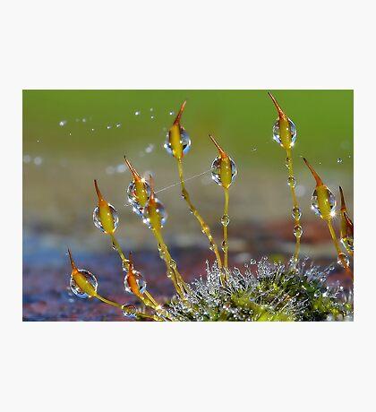 Macro Moss Grass Photographic Print