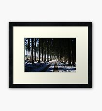 Afternoon in the woods Framed Print