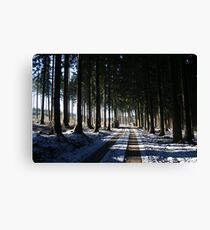 Afternoon in the woods Canvas Print
