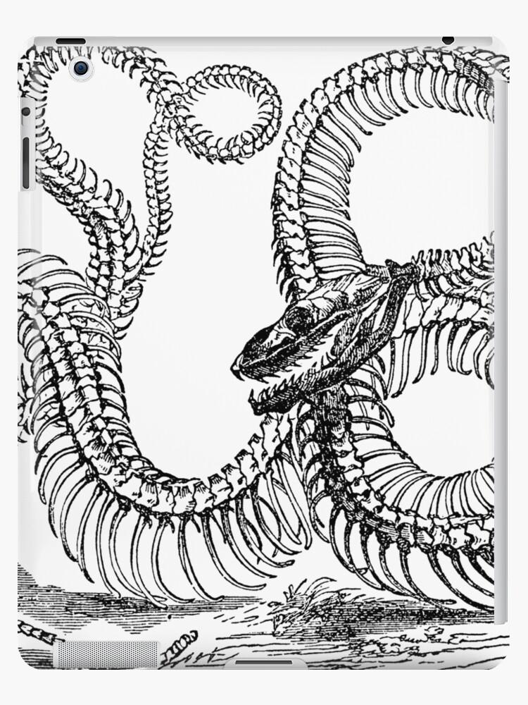 Vintage Boa Constrictor Snake Skeleton Illustration Retro 1800s