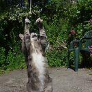Dancing cat by turniptowers