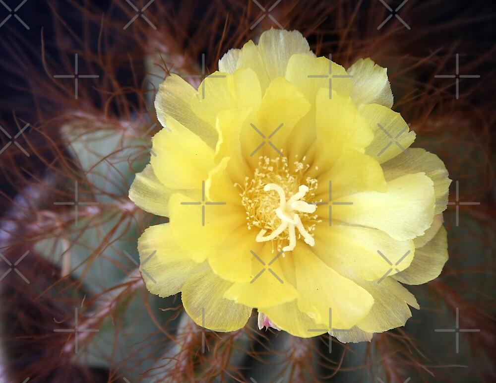 Barrel Cactus by CarolM