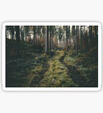 Boy walking through mystic forest landscape photography Sticker