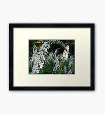 White flowers are not boring! Framed Print