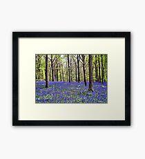 Knee Deep In Bluebells! Framed Print