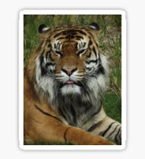 The True King of the Jungle Sticker