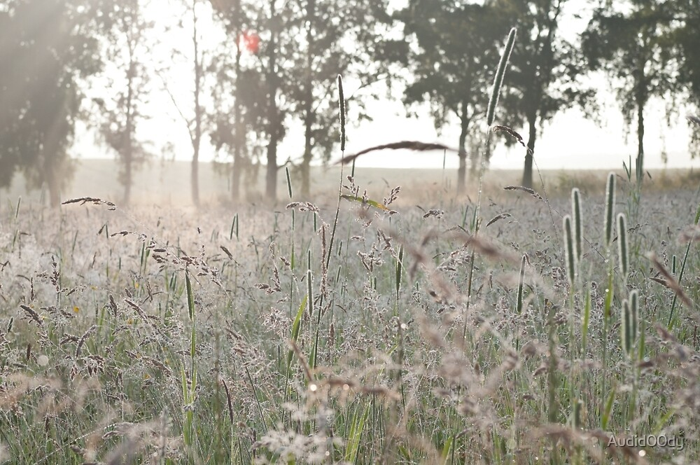 Morning Meadow by Audid00dy