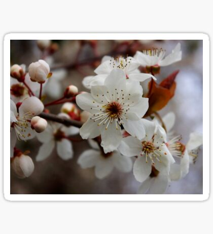 odd 8 petal cherry blossom Sticker