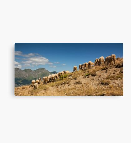 Show me your behind Canvas Print
