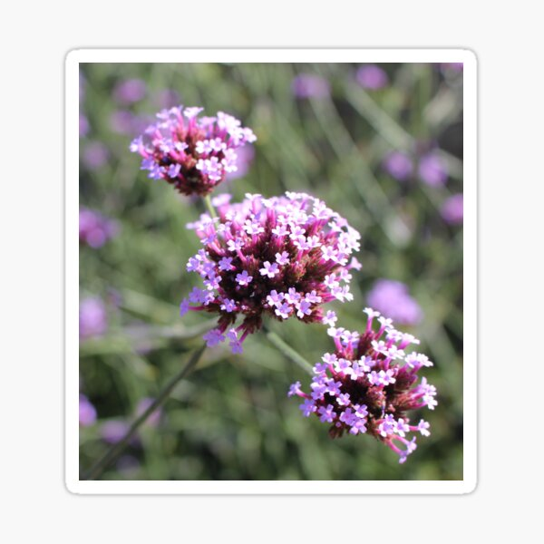 Lilac Verbena Flower Sprig Sticker