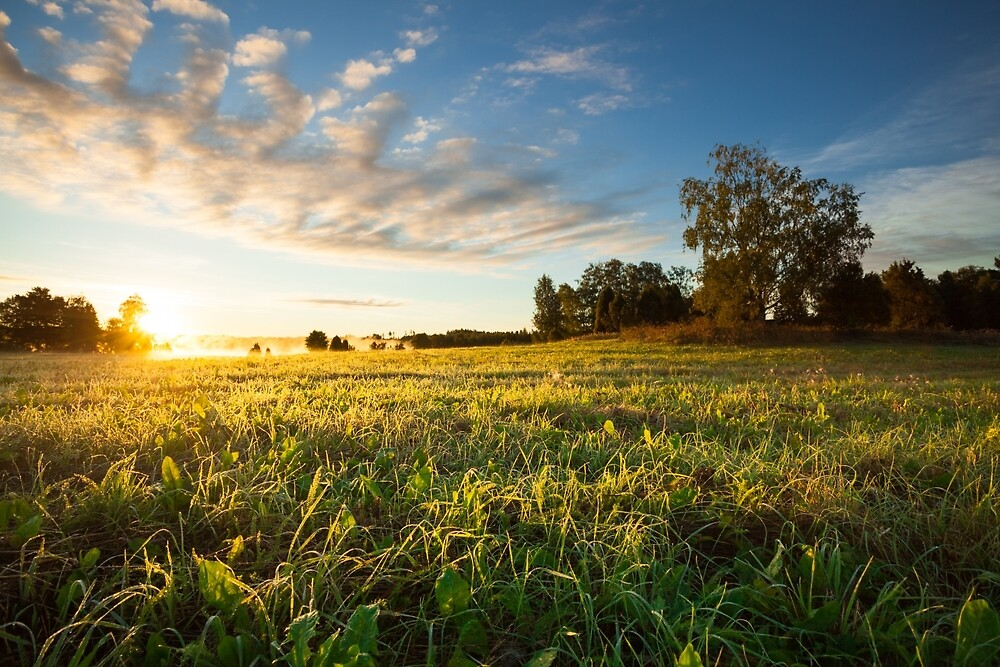 Tranquil grassland and trees at sunrise by Juhani Viitanen