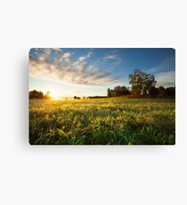 Tranquil grassland and trees at sunrise Canvas Print