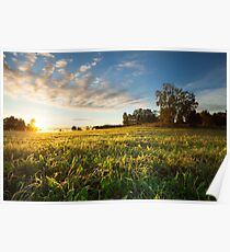 Tranquil grassland and trees at sunrise Poster