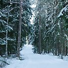 The winter forest by Mark Williams