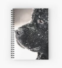 Beautiful big newfondlander dog in snow portrait Spiral Notebook