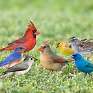 Little Flock of Songbirds by Bonnie T.  Barry