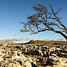 Tree on Twisleton Scars by David Lewins