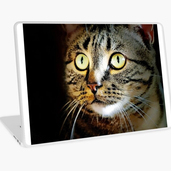 Manx Cat Laptop Skin