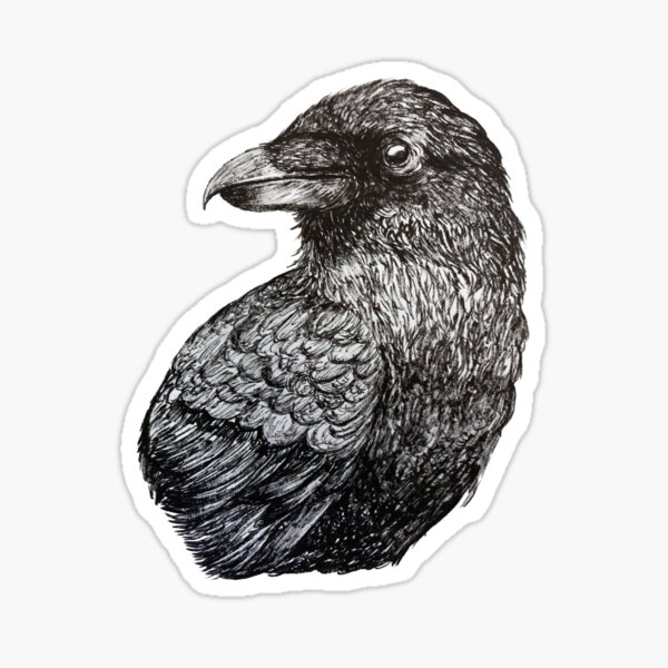 Black and white crow bird ink drawing Sticker
