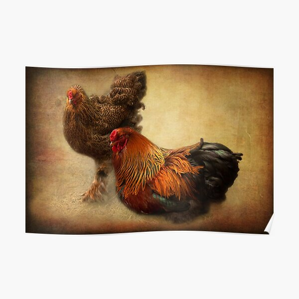 Rooster and hen Poster