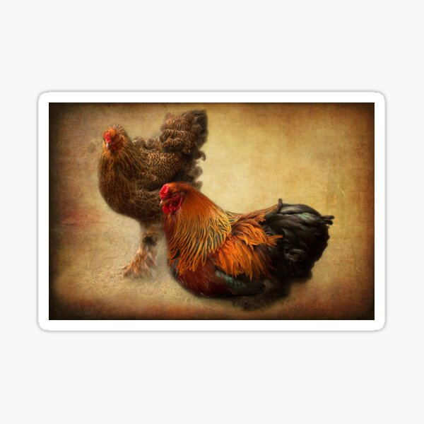 Rooster and hen Sticker