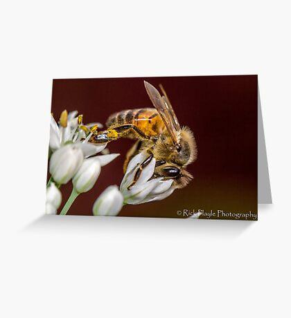 Beewonder Greeting Card