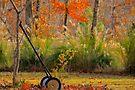 Garden Retiree  by NatureGreeting Cards ©ccwri