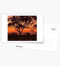 Australiana Postcards