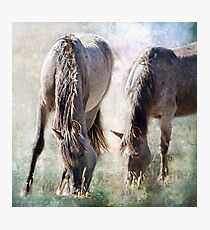 Grazing on Light and Freedom Photographic Print