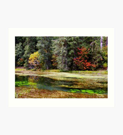 autumn spring Art Print