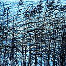 Rushes by Robert Steadman