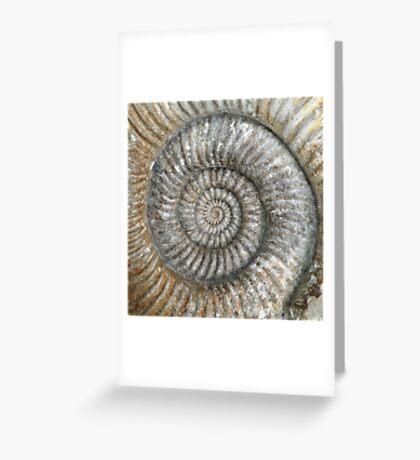 Ammonite Greeting Card