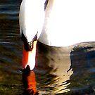 Swan by Robert Steadman