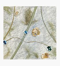 Coastal Nature Photographic Print